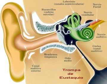 Dibujo que muestra las principales partes del oído